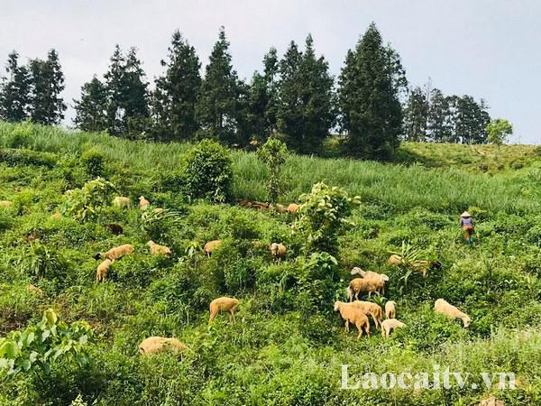Bức tranh phong cảnh làng quê châu Âu với những chú cừu tha thẩn gặm cỏ trên thảo nguyên xanh mượt.