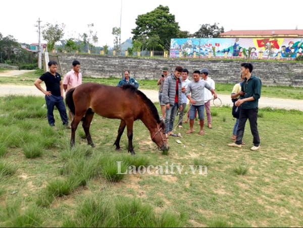 Các kỵ sỹ trao đổi kinh nghiệm khi tham gia các giải đua