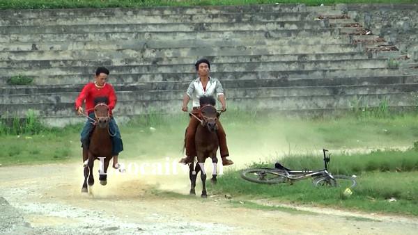 Cácnài ngựađang miệt mài tập luyện