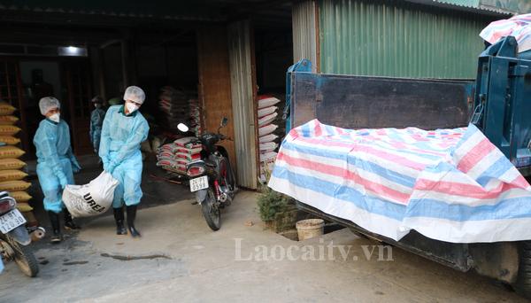 Lực lượng chức năng đưa lợn bị bệnh đi tiêu hủy.